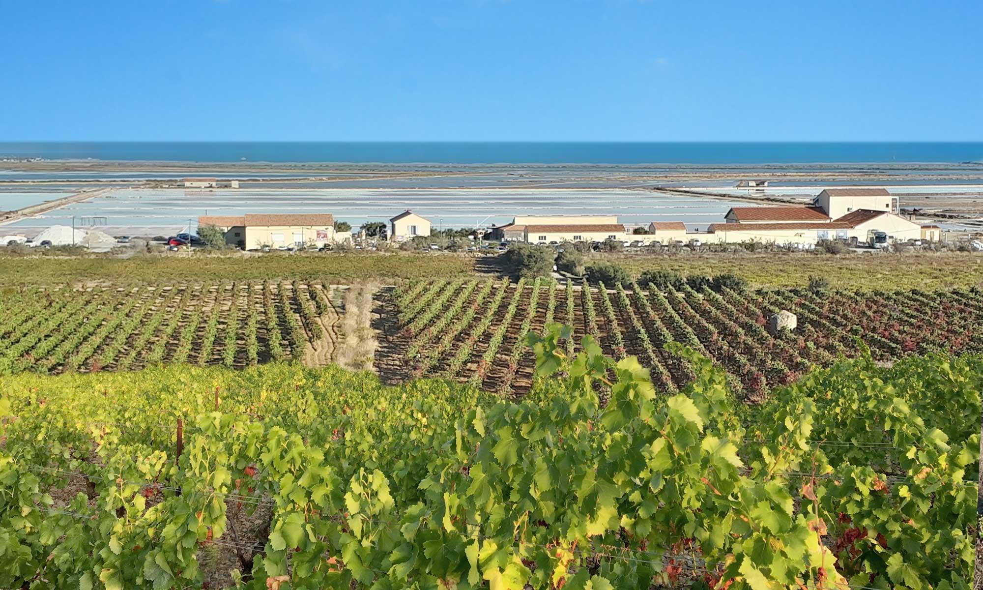 Vignobles d'Occitanie - sud-est