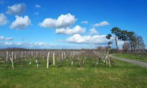 Domaine de Lescure - Vignoble de Fronton