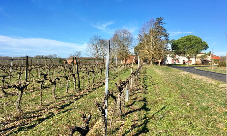Domaine de Rotier - VIns de Gaillac bios