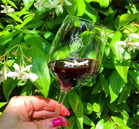 Vignobles d'Occitanie - Vin du Languedoc
