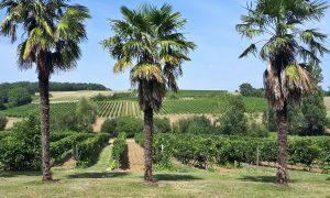 Domaine des Cassagnoles - Côtes de Gascogne et Armagnac