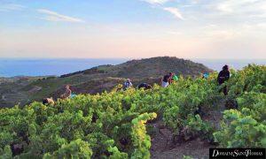 Domaine Saint Thomas - Vins de Collioure