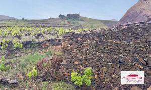 Clos Castell - Le vignoble en terrasse